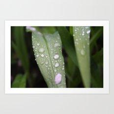 Grass After Rain Art Print
