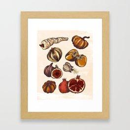 Fall Produce Framed Art Print