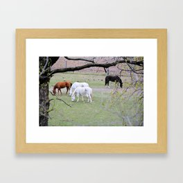 Spring Grazing Framed Art Print