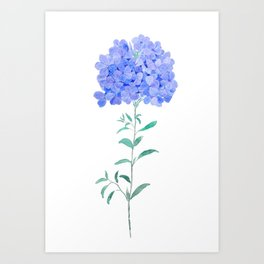 blue purple Plumbago auriculata flower Art Print