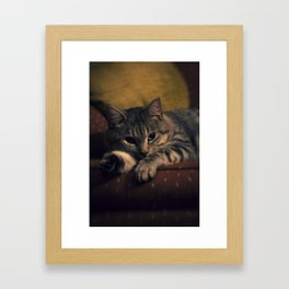 phil cat ii Framed Art Print
