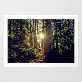 Hidden trail Art Print