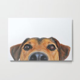 Dog looking at you Metal Print