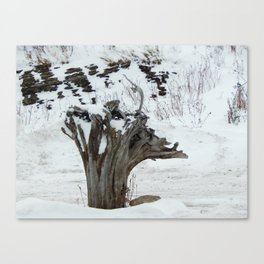 Stumpy and the Rock Wall in Winter White Canvas Print