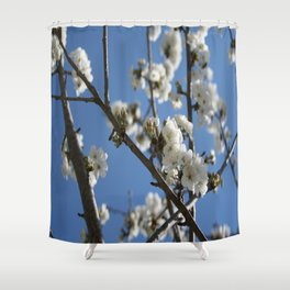 Cherry Blossom Branches Against Blue Sky Shower Curtain