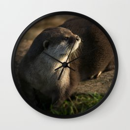 Otter Looking Into The Sunshine Wall Clock