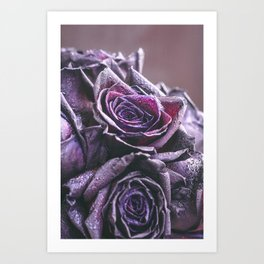 Macro photography of purple roses with raindrops. Fantasy and magic concept. Selective focus. Art Print