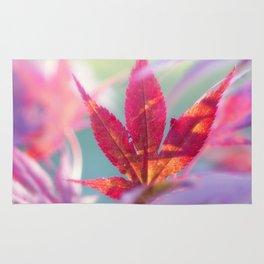 Acer palmatum Wonderland Rug