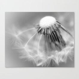 Dandelion Whispers Canvas Print