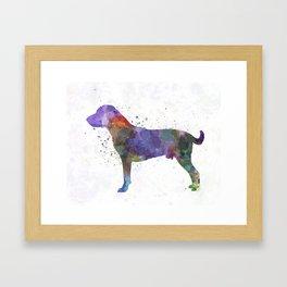 Harrier in watercolor Framed Art Print