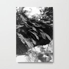 Ferns in the Tree Metal Print