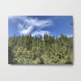 Redwoods in the Distance Metal Print