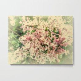 Spring Lilac A425 Metal Print