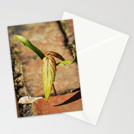 Baby Maple Stationery Cards