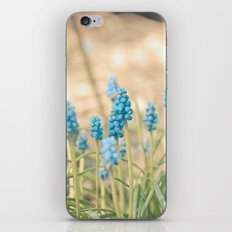Forest of Blue iPhone & iPod Skin