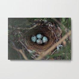 Mockingbird Eggs Metal Print