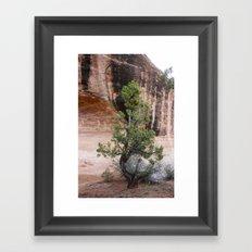 Desert Soloist Framed Art Print