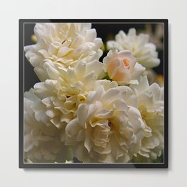 white roses and a light pink bud (square) Metal Print