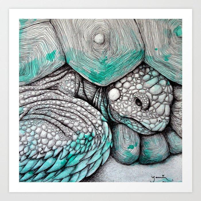 Tortoise Kunstdrucke