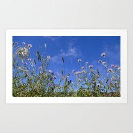 Field of blooming wildflowers on a beautiful summer day Art Print