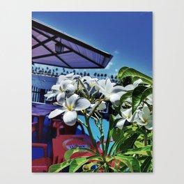 Plumeria in Brazil Canvas Print
