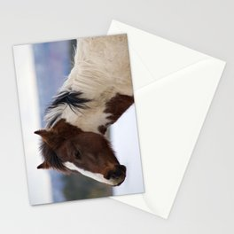 Tri-Colored Horse Stationery Cards