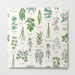 Herbs Collection Pattern Metal Print