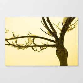 Snow settled on a bare tree Canvas Print