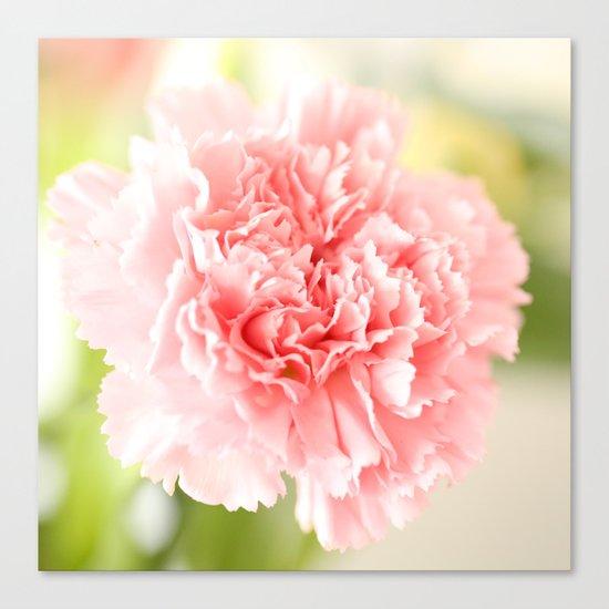 Pink Carnation Admiration  Canvas Print