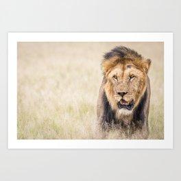 Male Lion starring Art Print