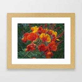 Red Bird of Paradise #1 Framed Art Print