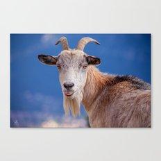 Goat - tongue out 8078 Canvas Print