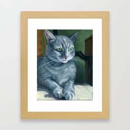 Gray Tabby Cat Sitting in Sunligh Framed Art Print