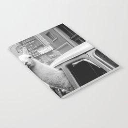 New York Llama Notebook