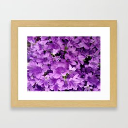 Campanula flowers as a background Framed Art Print