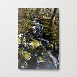 Forest Brook  Metal Print