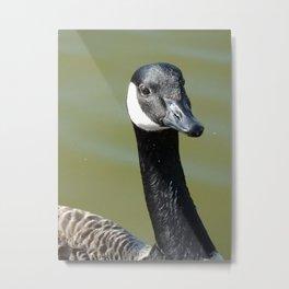 A beautiful goose  Metal Print