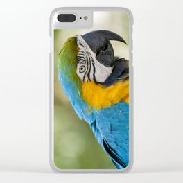 Blue Yellow Parrot (Bird Photography) Clear iPhone Case