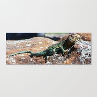 lizard Canvas Prints featuring Lizard by Christy Leigh