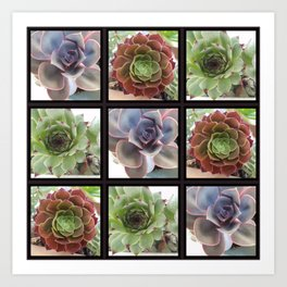 Succulents A plenty Art Print