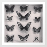 Black Butterflies Art Print