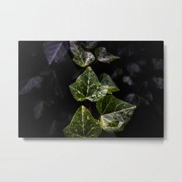 Wet ivy Metal Print