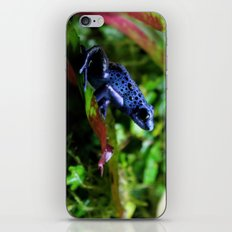 Blue Poison Dart Frog iPhone & iPod Skin