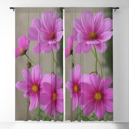 Pink Cosmo Daisies Blackout Curtain