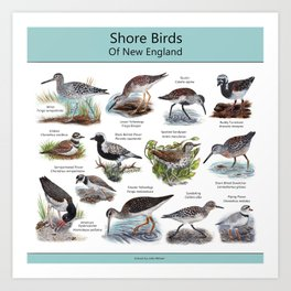 Shore Birds of New England Art Print