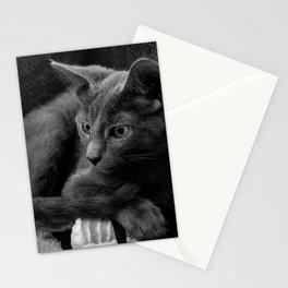 Russian Blue Kitten Portrait 2 Stationery Cards