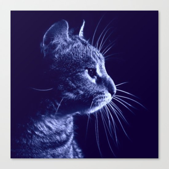 Cat profile Canvas Print