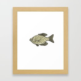 Crappie Fish Side Drawing Framed Art Print