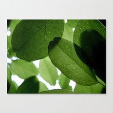 It Ain't Easy Being Green Canvas Print