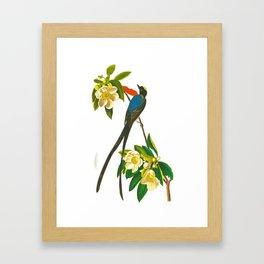 Fork-tailed flycatcher Bird Framed Art Print